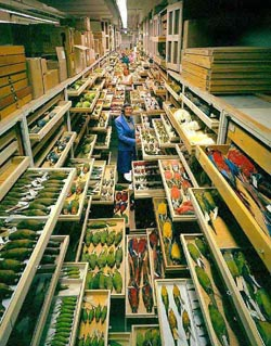 Reserves of the bird collections, Smithsonian National Museum of Natural History, United States. Copywright NMNH
